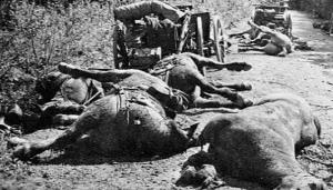Chevaux tués